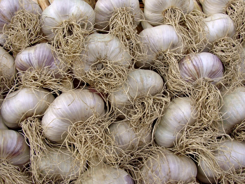 GARLIC WELLNESS